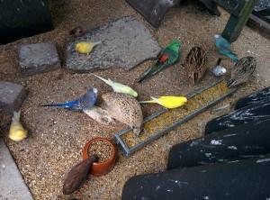 Vogels genieten van eivoer